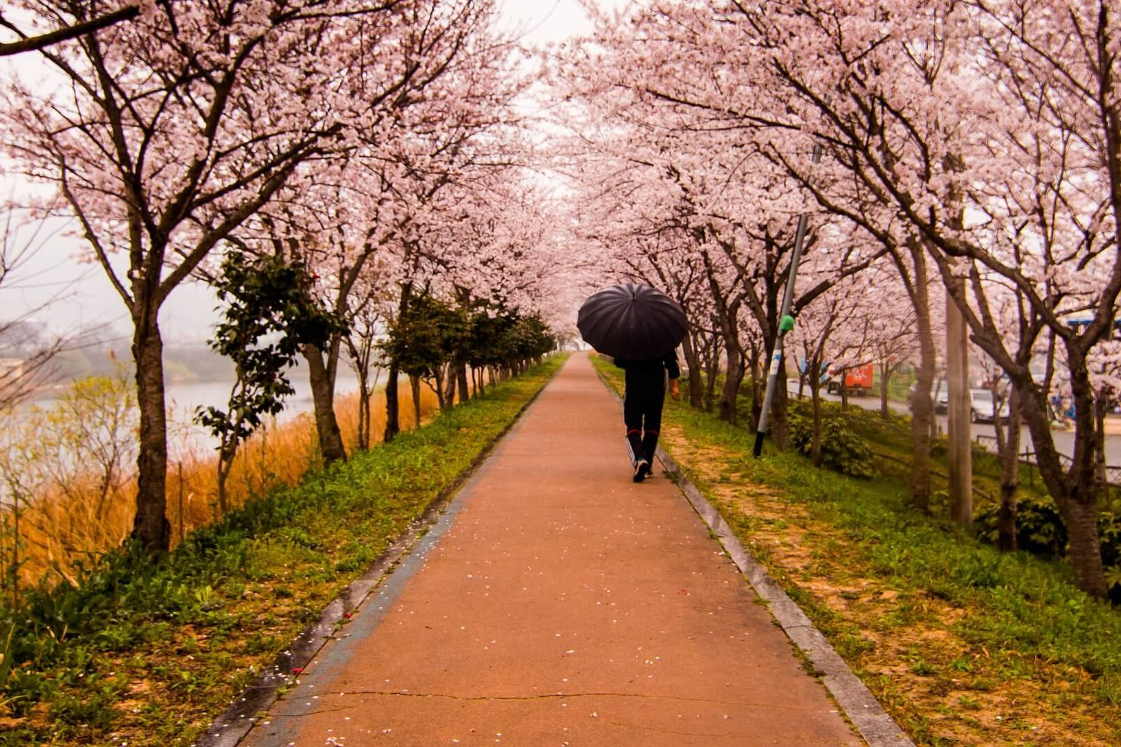 Cherry Blossom CIA Hacking tools